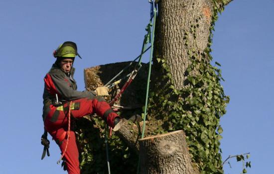 Baumfällungen mit Seiltechnik